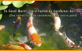 rotten-fish-conaminates-pond